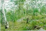 Upper western creek bank vegetation around Waminda Oval.